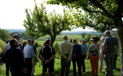 Wijnwandelingen: ontspannend en informatief